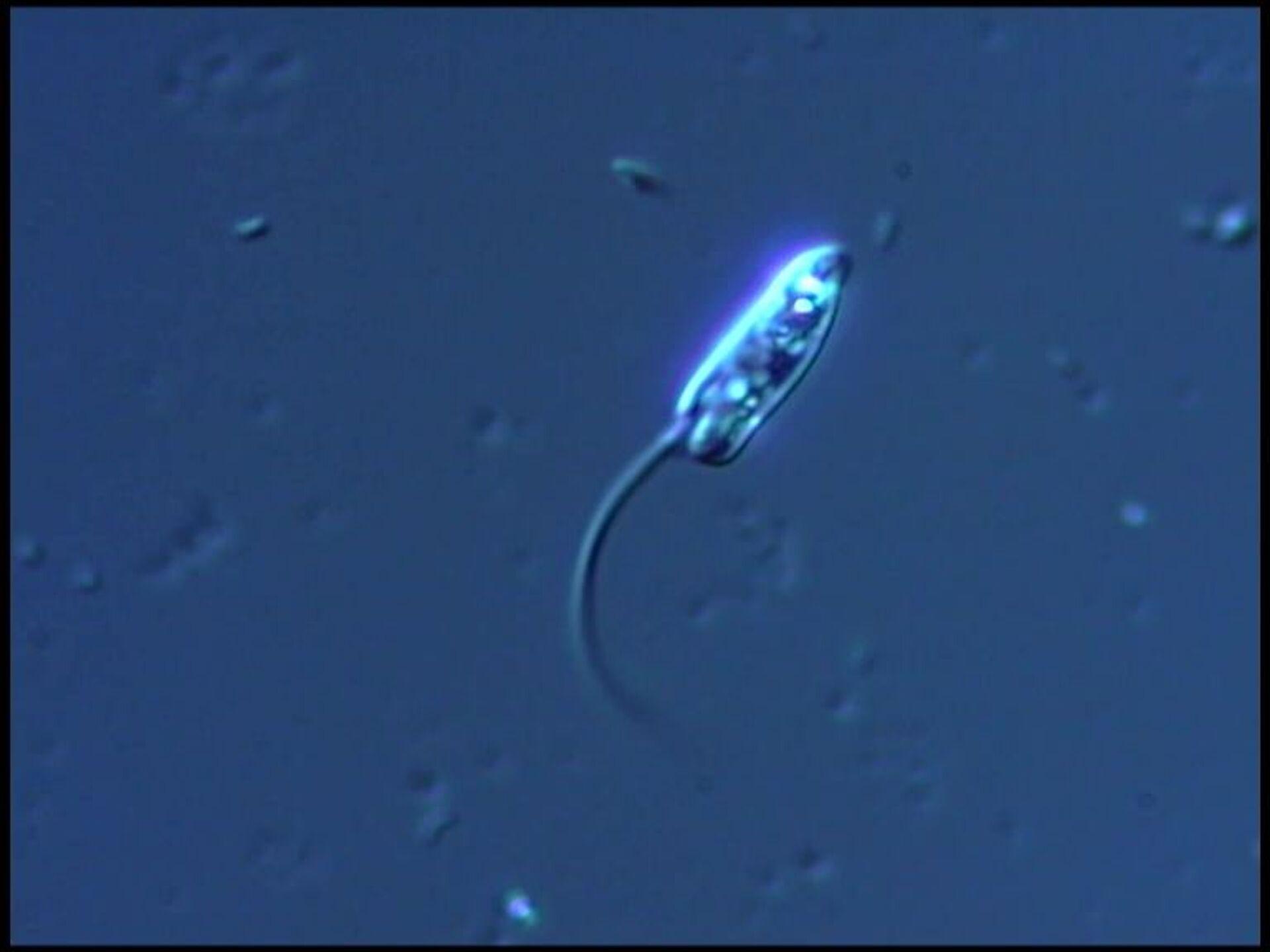 Tümen Devlet Üniversitesi'nden Rus uzmanlar, Büyükçekmece Gölü'nde yeni bir mikrop türü keşfetti - Sputnik Türkiye, 1920, 10.08.2021
