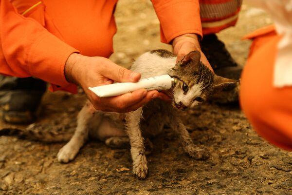 Gönüllüler, yangında yaralanan kedinin tedavisini yapıyor - Sputnik Türkiye