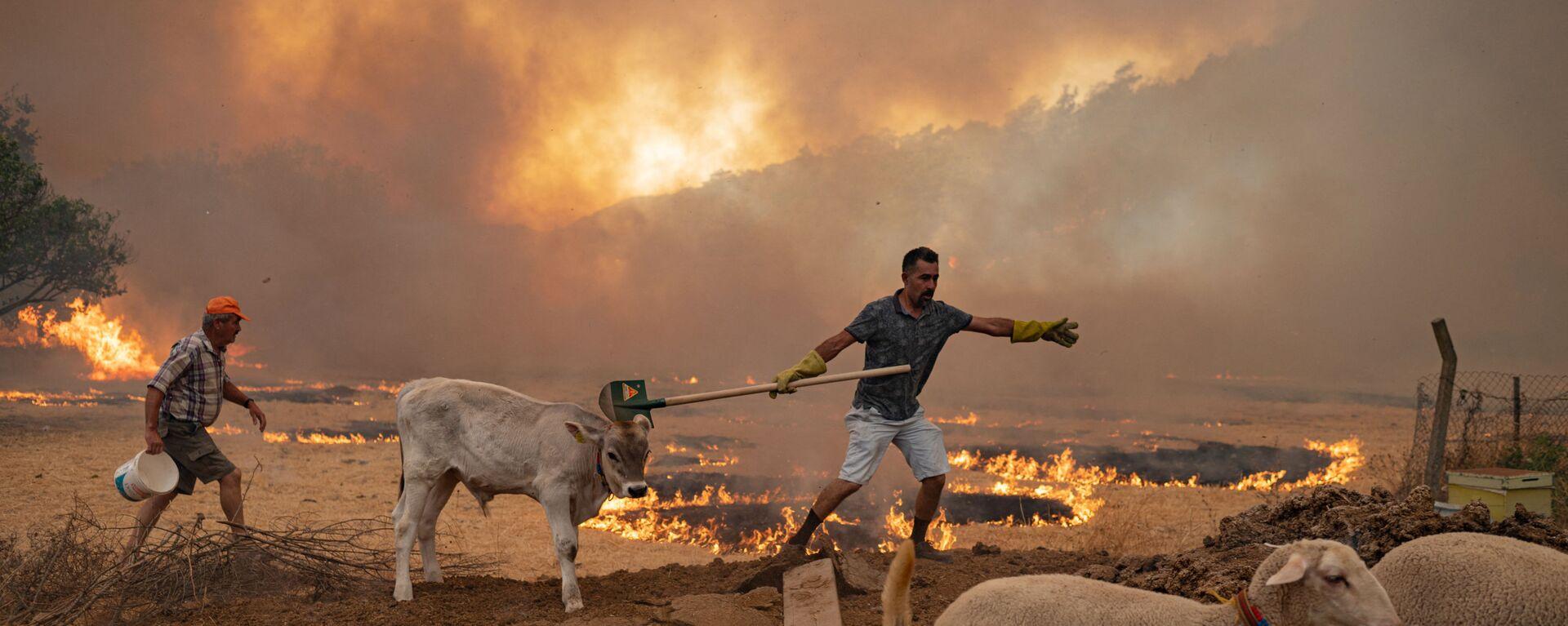 Türkiye'deki orman yangınlarından etkilenen hayvanlar - Sputnik Türkiye, 1920, 04.08.2021