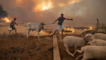 Yerleşim yerlerindeki besiciler hayvanlarına  gerekli müdahaleyi yapıyor,  büyükbaş, küçükbaş hayvanlarla kedi ve köpekleri hızlı bir şekilde yangın bölgesinden uzaklaştırmaya çalışıyor