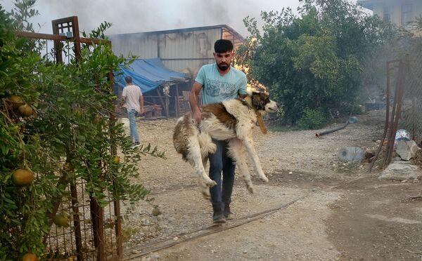 Antalya'nın Manavgat ilçesindeki orman yangını sırasında yaralanan hayvanların tedavisi için gönüllü veterinerler harekete geçti. - Sputnik Türkiye