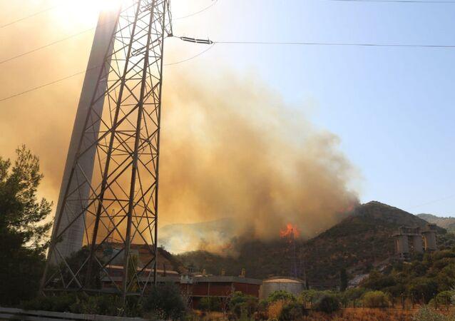 Kemerköy Termik Santrali yakınlarındaki orman yangını