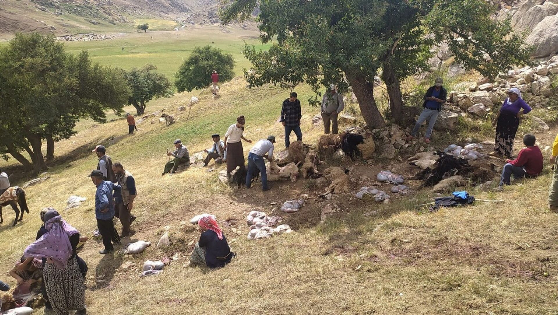 Hakkari'nin Yüksekova ilçesinde etkili olan sağanak sırasında ağaç altında olan 30 koyun telef oldu, 30'a yakın kuzu da yaralandı. - Sputnik Türkiye, 1920, 07.08.2021