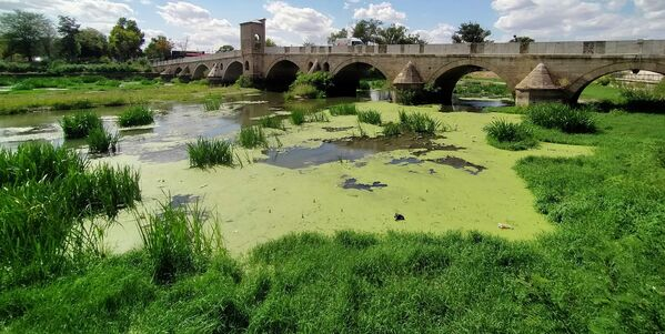 Tunca Nehri atık ve yosunlarla kaplandı  - Sputnik Türkiye