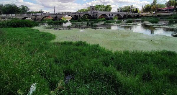 Tunca Nehri atık ve yosunlarla kaplandı, Meriç Nehri kumsala döndü  - Sputnik Türkiye