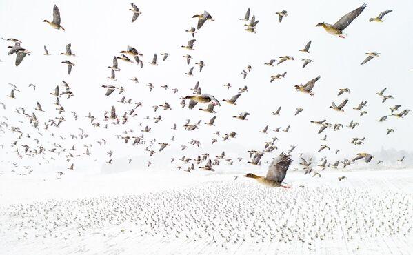 2021 Drone Fotoğraf Ödülleri - Sputnik Türkiye