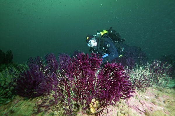 Çanakkale Boğazı'nda tarihi batıklarda dalış turizmi - Sputnik Türkiye