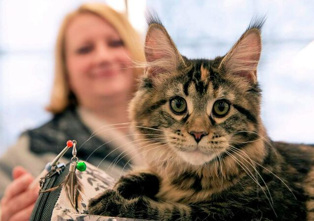 Belarus'taki Uluslarası Kedi Sergisi