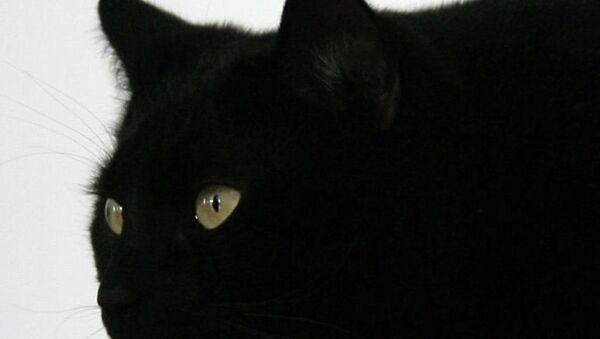 Kara Kedi - Sputnik Türkiye