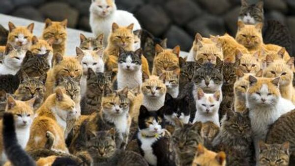 Bir Japonya adasında yaşayan kediler - Sputnik Türkiye
