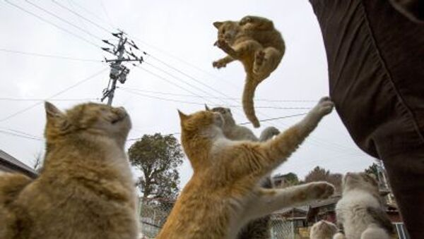 Japonya'da yaşayan kediler yemek istiyor - Sputnik Türkiye
