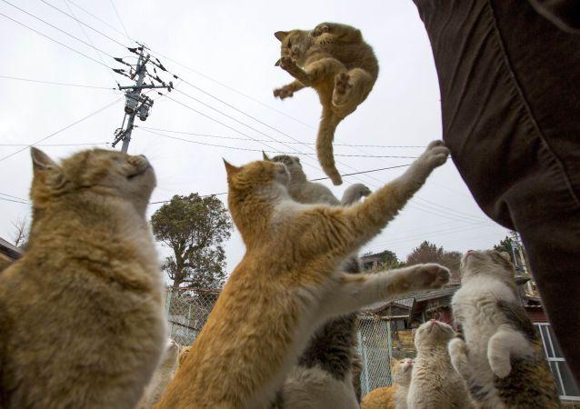 Japonya'da yaşayan kediler yemek istiyor