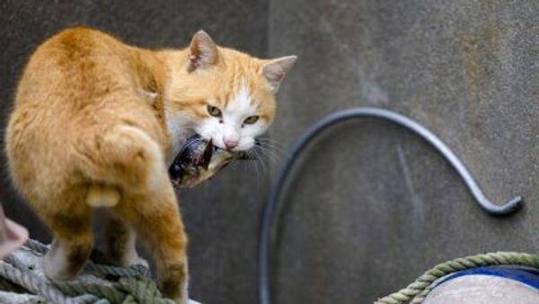 Ağzında balık olan bir kedi - Sputnik Türkiye