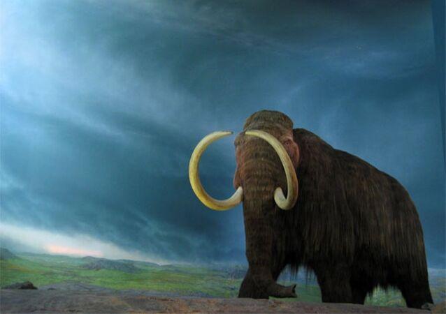 Yünlü mamutlar