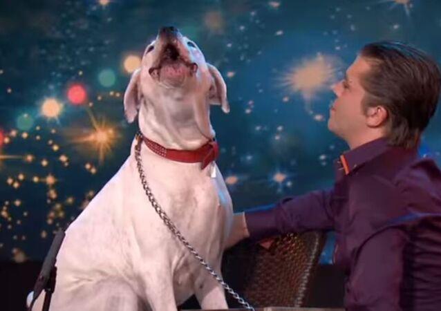 Şarkı söyleyen köpek