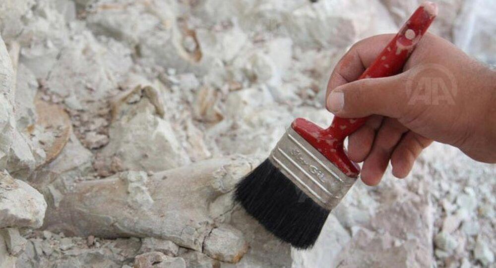 Çin'de dinozor fosili bulundu