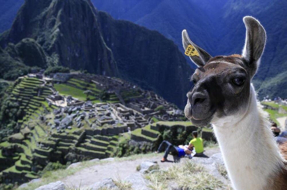İnkaların zamana meydan okuyan eserlerini görmek ve Amazon ormanlarındaki vahşi yaşamf tanıklık etmek için dünyanın dört yanından milyonlarca turist her yıl Peru'yu ziyaret ediyor.