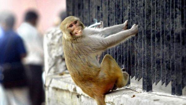 Maymun - Sputnik Türkiye