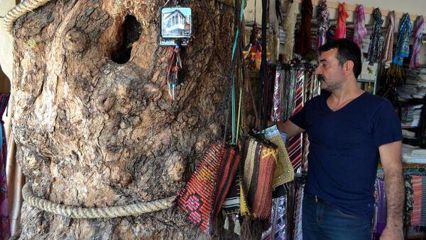 Dedesinin diktiği çınarı dükkanında koruyor - Sputnik Türkiye
