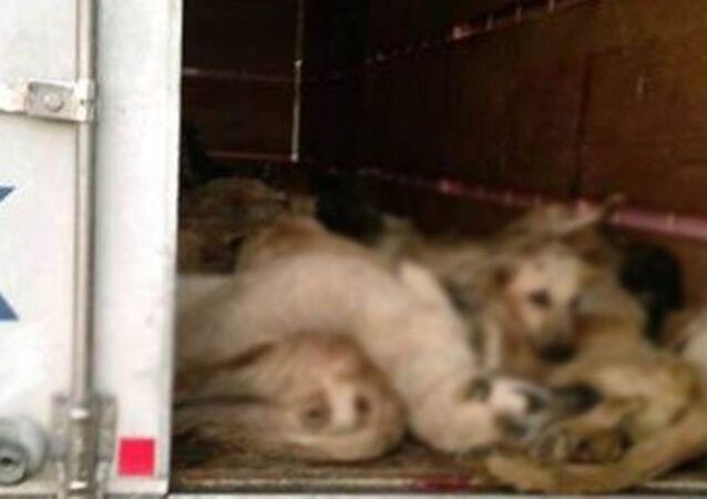 TIR'da köpek katliamı