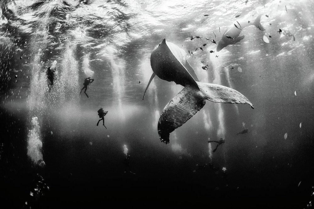Ödüllü fotoğrafçıyla okyanusun derinliklerine doğru