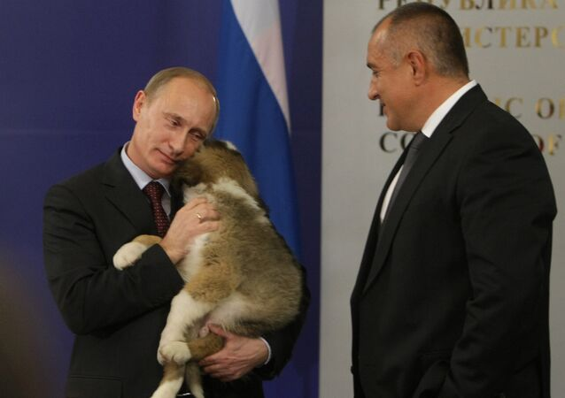 Bulgarian Prime Minister Boyko Borissov presents puppy to Russian Prime Minister Vladimir Putin