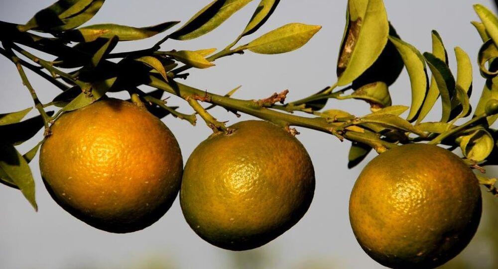 Tescilli mandalina ve limonlar