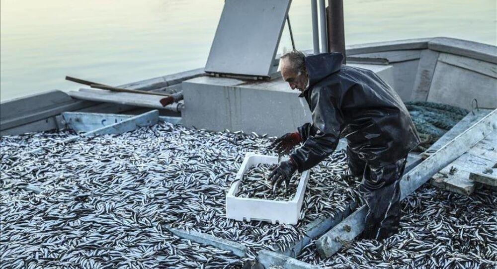 Balıkçıların yüzünü hamsi güldürdü