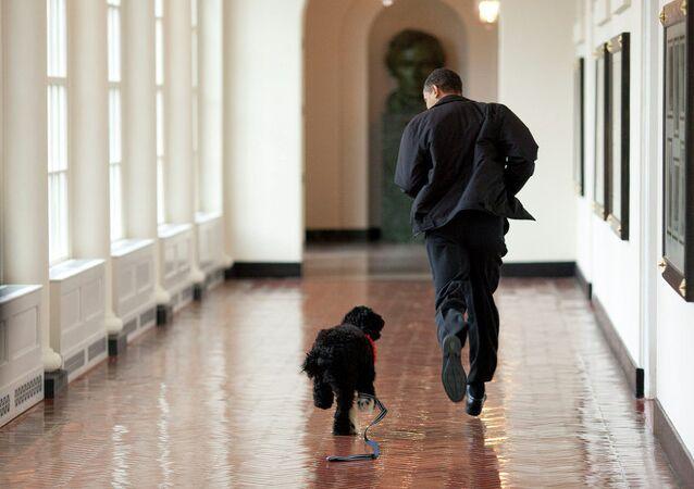 Obama ile köpeği
