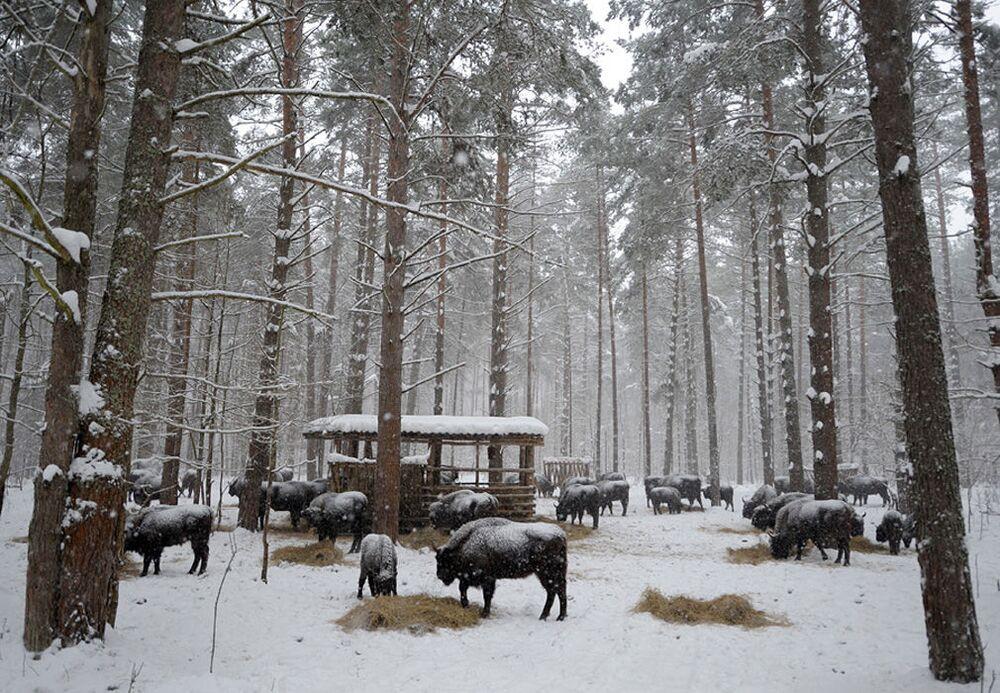 Orlovskoye Polesye Milli Parkı