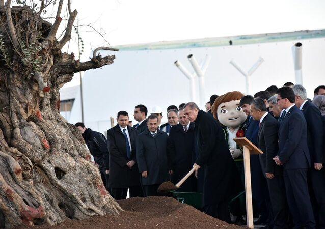 Erdoğan, Antalya'da zeytin ağacı dikti.