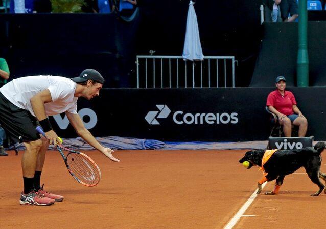 Brezilya Açık Tenis Turnuvası