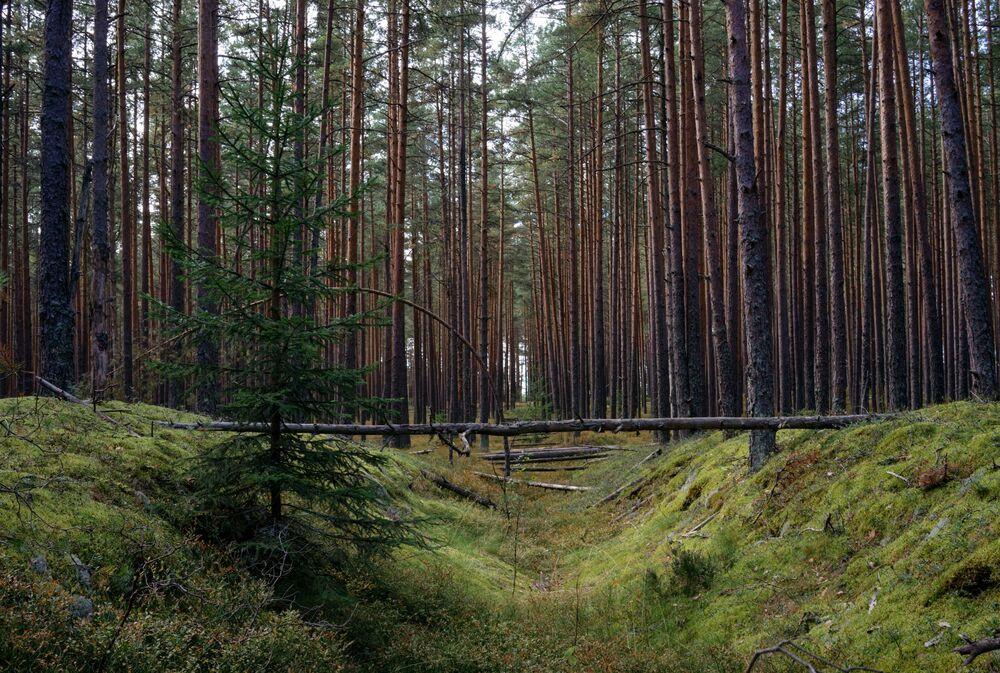 Finlandiya Körfezi'nde 'Huş Adaları' adlı vahşi doğa parkı.