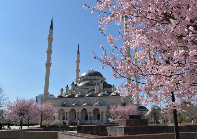 Grozni'de sakura çiçek açtı