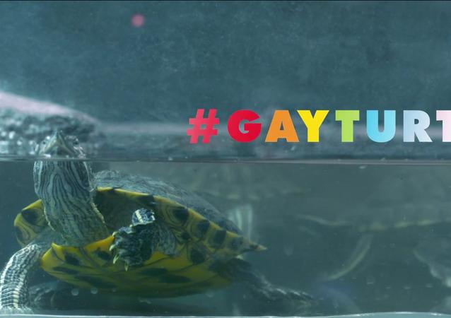 Uluslararası Af Örgütü/Gay Turtle