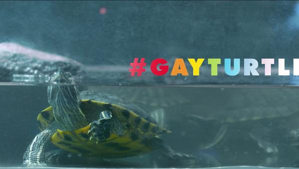 Uluslararası Af Örgütü/Gay Turtle - Sputnik Türkiye