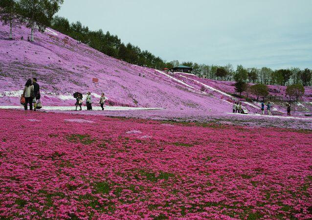 Japonya'nın en kuzeyinde bulunan Hokkaido adası