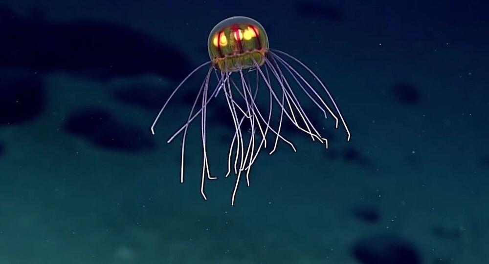 Okyanusun karanlık sularında yapılan araştırmalarda, bu dünyadan değilmiş gibi görünen bir denizanası ile karşılaşıldı.