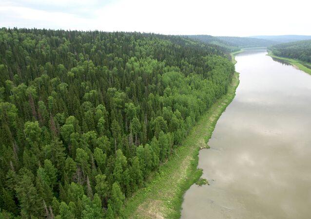 Rusya ayrıca dünyada en çok ormanlık araziye sahip ülke. Rusya'da ormanlar ülke yüzölçümünün yüzde 45'ini oluşturturuyor ve 7 milyon 762 bin 602 kilometre karelik bir alanı kapsıyor. Rusya'daki ormanlık arazilerin büyüklüğü Avustralya kıtasıyla aynı.