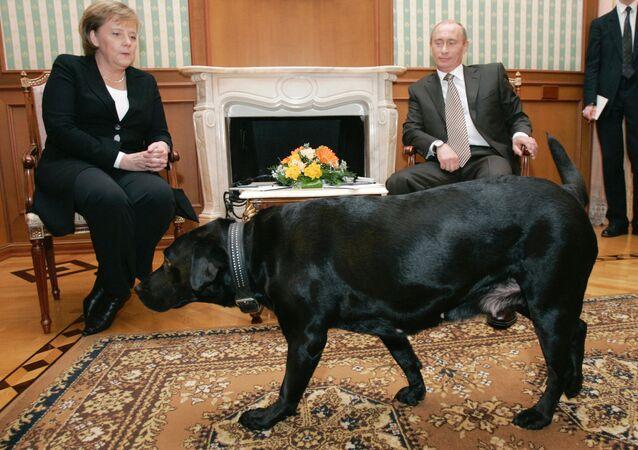 Almanya Başbakanı Angela Merkel ve Rusya Devlet Başkanı Vladimir Putin