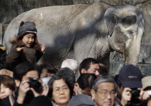 'Dünyanın en yalnız fili olarak' anılan Hanako isimli fil