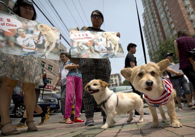 Çin'deki köpek eti festivali protesto edildi.