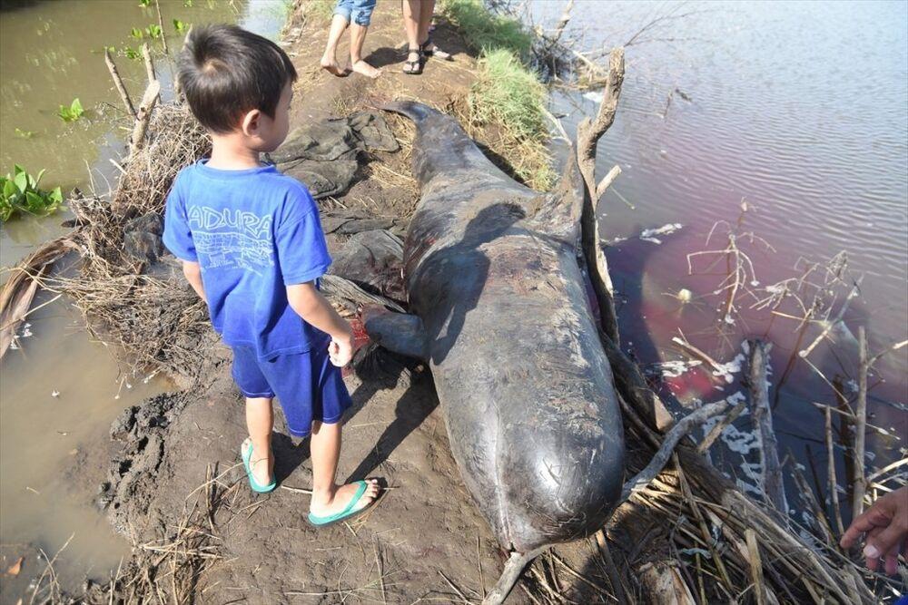 Endonezya balina