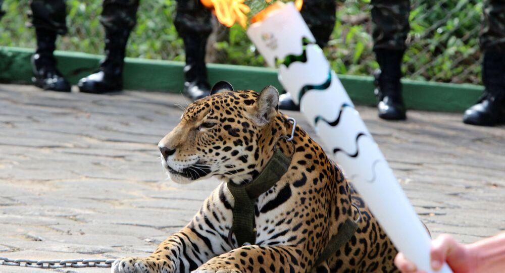 Olimpiyat töreninde tasmasından kurtulan jaguar öldürüldü