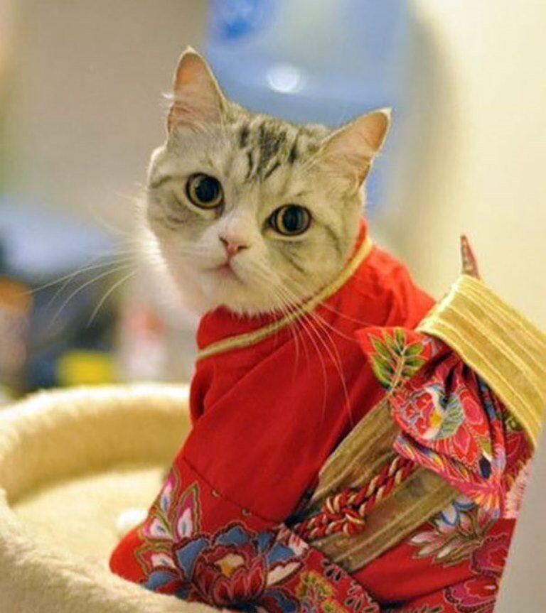 Kimonolu kediler