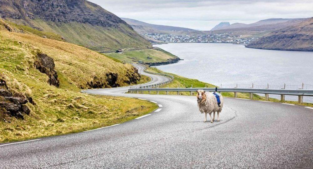 Google koyunlara kamera taktı