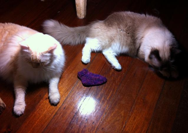 Çorap ve kediler