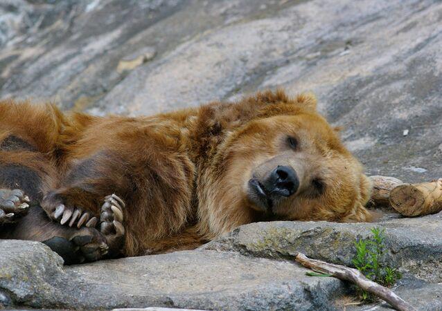 Ormanda ayı avı