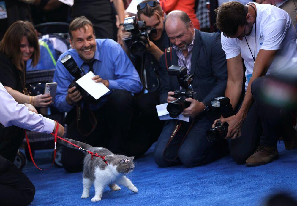 ABD'li Barry Sonnenfeld'in yönettiği Nine Lives (Dokuz canlı bay tüylü) filminin galası dün Hollywood'da gerçekleştirildi. Galada kırmızı halıda Malin Weissman, Cheryl Hines, Jennifer Garner gibi isimlerin yanı sıra kediler de yürüdü.