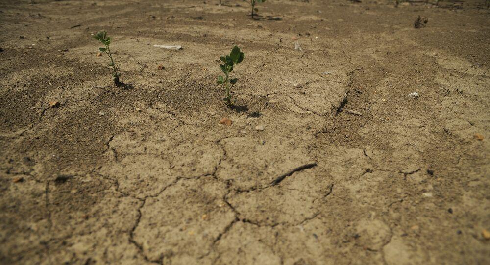 Soya tarlası / Tarım